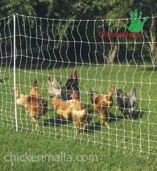 malla protegiendo gallinas de depredadores