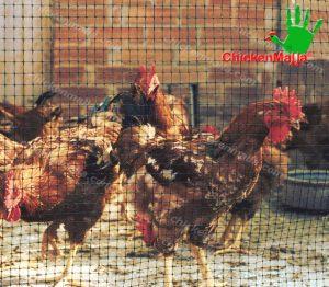 gallos y gallinas dentro de jaula de red chickenmalla