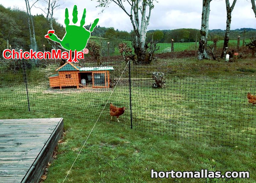 gallinas protegidas con chickenmalla